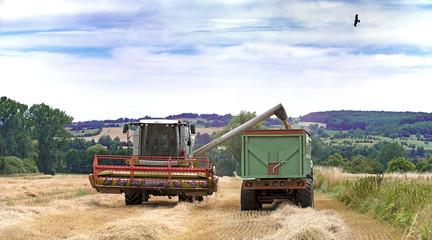 Moissonneuse de céréales en action sur le champ