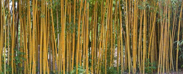 Schöner Bambuswald im Park der Villa Carlotta am Comer See