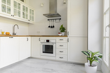 Plant in white kitchen interior with cabinets and silver cooker hood above countertop. Real photo