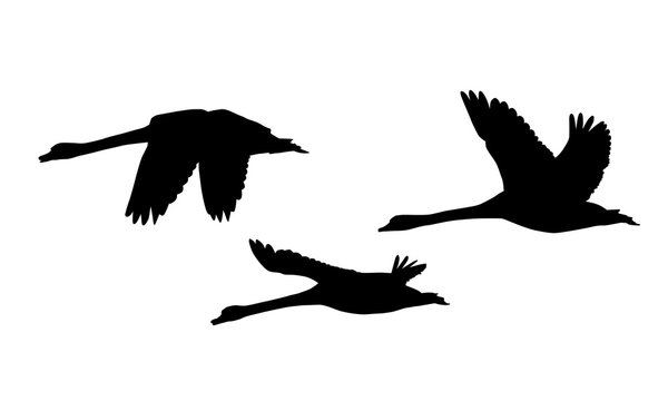 Set of three silhouettes of flying swans - vector