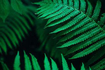 Wall Mural - Close up photo on fern leaf on dark background