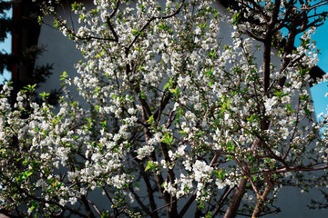 Obraz Flowers in the garden - fototapety do salonu