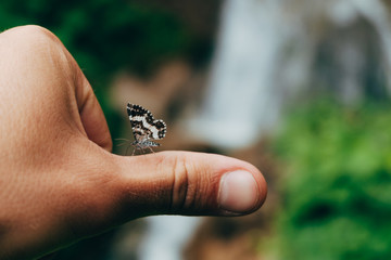 little butterfly at mans hand pov