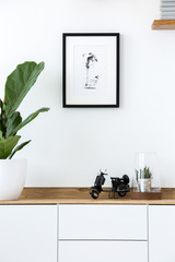 Plant on wooden white cupboard in simple living room interior with poster. Real photo