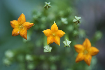 Flower China