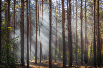 Beautiful morning scene, sun rays break through the branches of trees.