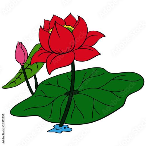 Lotus Cartoon Illustration Isolated On White Background For Children