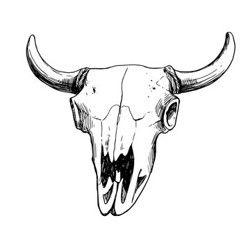 Hand drawn vector illustration - skull animal. Vintage. Boho style. Perfect for T-shirts, clothes, postcards