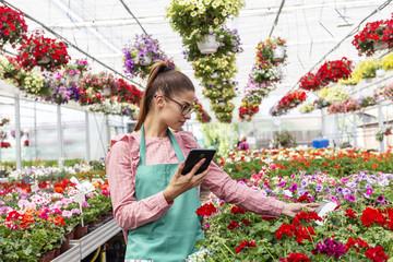 Girl calculate price of fresh flowers in nursery garden