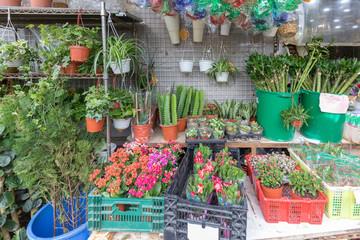 Plants Shop China
