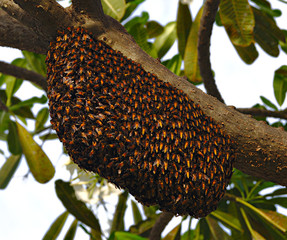 bee's family house in Thailand on the tree