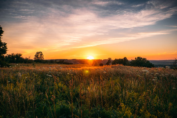 Beautiful summer sunset with waving wild grass in sunlight, rural meadow or field in countryside Wall mural