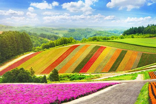beautiful flowers garden colorful hill at Biei in japan