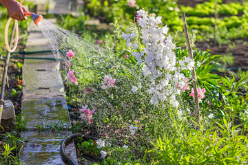 Fototapete - The garden blurred background, garden beds, pour the water