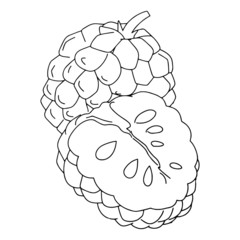 Custard apple cartoon illustration isolated on white background for children color book