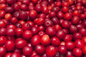 small fresh thorn-plum red and pink