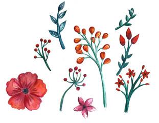 Hand drawn flowers watercolor illustration spring summer brunch