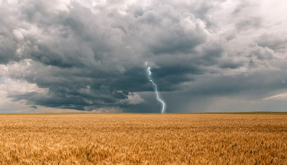 thunderstorm hurricane clouds field agricultural crops wheat