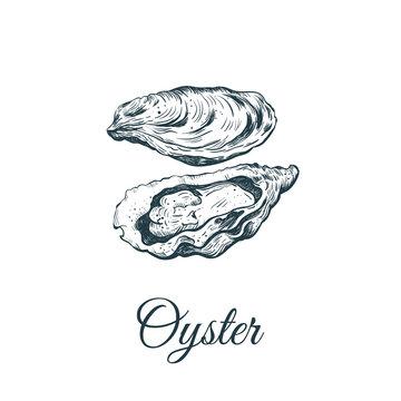 Oyster sketch vector illustration.