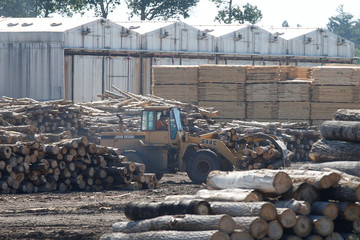A worker moves logs at the Murray Brothers Lumber Company in Madawaska