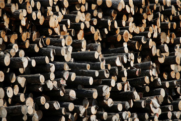 Logs are pictured at the Murray Brothers Lumber Company in Madawaska