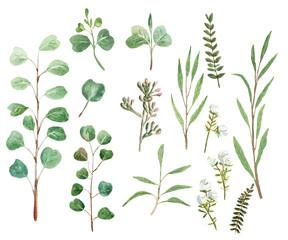 Eucalyptus watercolor set
