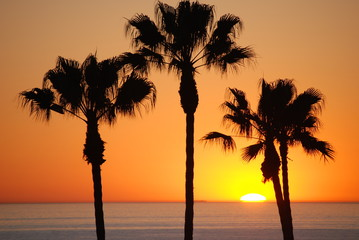 beautiful sunset in laguna beach california