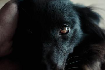 Cão encarando a câmera