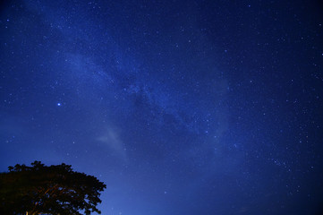 Night sky with the Milky Way over the forest and trees,Thailand.
