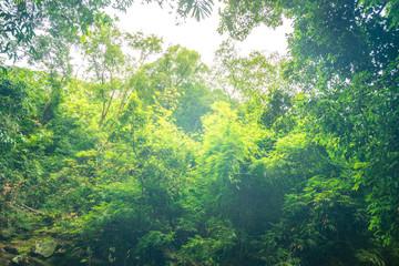 vintage filter on green tree forest