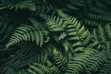 Natural green fern wallpaper