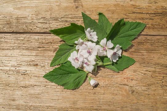 Marshmallow flower on wooden table.