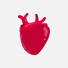 Human heart in vector