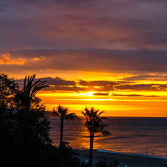 Silhouette of palm trees at sunset, Spain