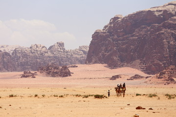 Caravan of camels walking in the Wadi Rum desert in Jordan on a sunny day