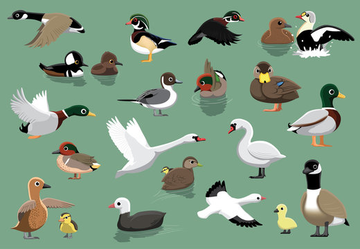 US Ducks Cartoon Vector Illustration