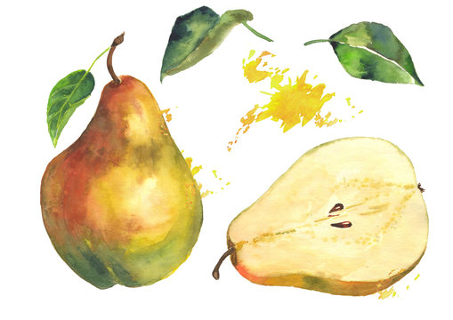 Watercolor pear and pear cut on an isolated background with green leaves and elements