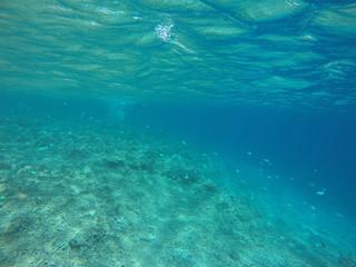 undersea view japan zamami