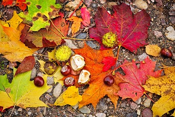 abstract autumn fall yellow leaves nature background