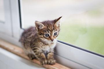 Two-color little cute kitten walking alone on windowsill