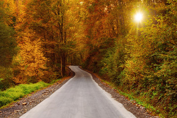 Beautiful sunny autumn landscape with auto road through the forest, sun shining and yellow red trees
