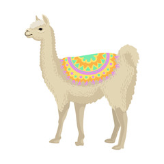 White llama alpaca animal wearing bright ornamented poncho, side view vector Illustration on a white background