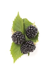 Top view of blackberry fruit isolated on white background. Blackberries on green leaf. Berries from above.