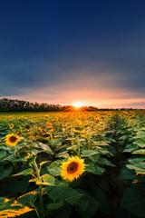 Light of sunset