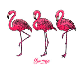 set of cute flamingos
