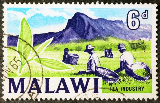 Tea industry on postage stamp of malawi