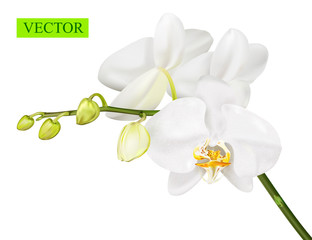 Orchid branch isolated on white background.