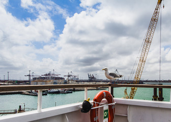 Haven view with cranes of Dover port. Big seagull sitting on the corner of the ferry.