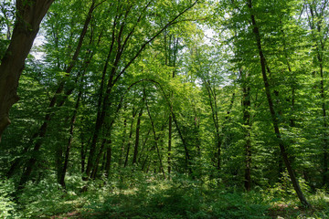 scenic view of forest with grass and green trees during daytime