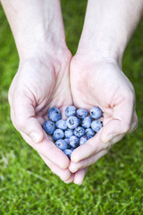 Blueberry in the hands of a white woman.